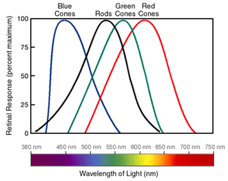 "Three different cone types can detecting overlapping photon energies(wavelengths), giving us our ""visible range"" of light. See note 1 for a bit of info on wavelength / photon energies."