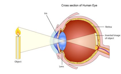 A very broad summary of how light enters our eye