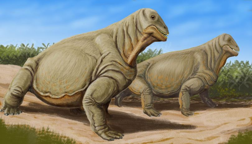 Moschops illustration from wikipedia