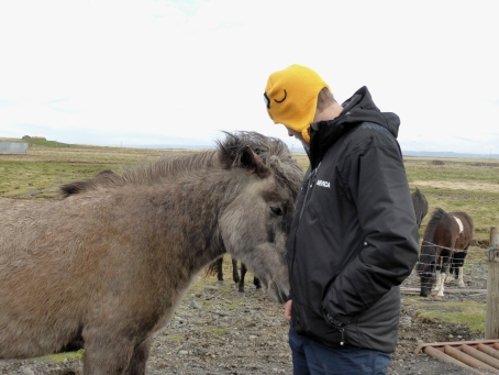Tom making friends with an Icelandic horse