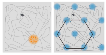Top-down map of a rat wondering freely around a square room. Orange shows activation of a given place cell. Blue shows activation of a given grid cell.