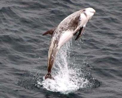 Rissos-Dolphin-Birgit-Winning