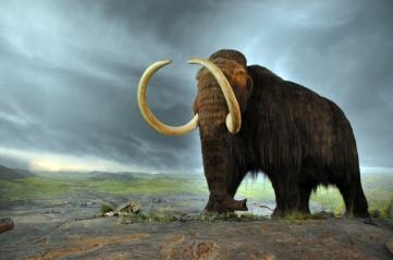 March 2014 woolly mammoth clone