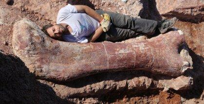 May 2014 massive titanosaur dinosaur